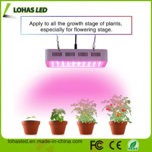 Full Spectrums 300W 450W 600W 900W 1000W LED Grow Light Eshine Systems Hans Panel LED Grow Light Zhongshan Factory with Ce RoHS pictures & photos