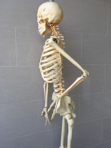 Human Skeleton Anatomy Medical Teaching Model (R020103A) pictures & photos