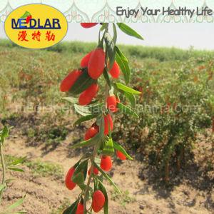 Medlar Organic Food Red Dried Goji Lycium