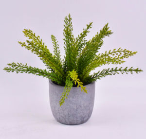 Long Plants Pine Spray in Cement Pot for Office Decoration