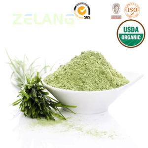 Natural and Instant USDA Organic Barley Grass Powder