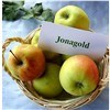 2015 Chinese New Jonagold Red Apple