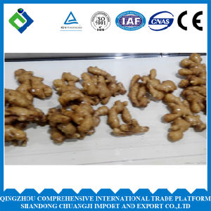 Chinese High Quality Fresh Ginger 250g up 2016 pictures & photos
