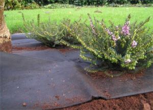 Weed Control Ground Cover pictures & photos