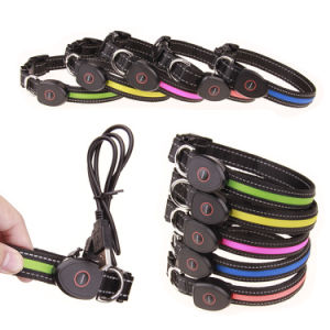 LED Dog Collar Nylon USB Rechargeable Pets Supplies pictures & photos