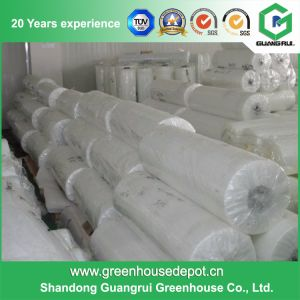 High Quality Greenhouse Plastic Film Rolls for Sale pictures & photos