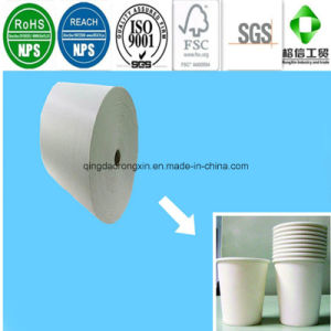 Ivory White PE Coated Paper for Paper Cup pictures & photos
