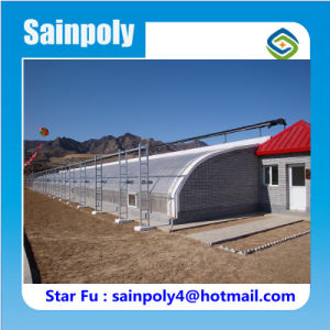 Cold Area Used Solar Greenhouse for Strawberry pictures & photos