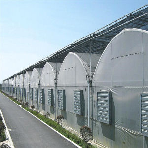 Best Quality Multi Span Greenhouse with Anti-Fogging Plastic Film
