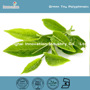 Natural 30%-95% Tea Polyphenol 40%-98% EGCG Green Tea Extract Powder