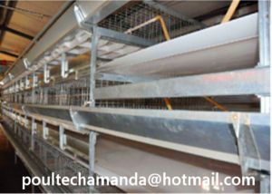 Automatic Hot/Cold Galvanization Battery Broiler Chicken Cage for Farming Hot Selling (H Frame Type) pictures & photos