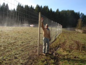 Metal Deer Fence pictures & photos