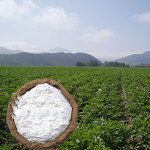 Supply Native Potato Starch