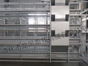 Full Automtic Battery Layer Cage pictures & photos