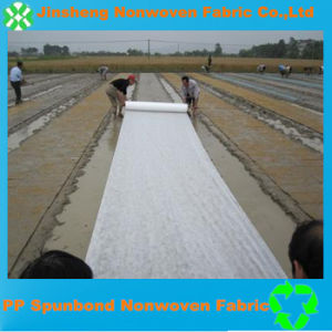 PP Spunbond Nonwoven Fabric for Cover Crop (10g-300GSM)