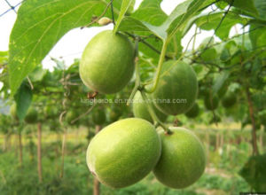 Luo Han Guo Extract a Natural Sweetening Agent, Total Mogrosides by UV pictures & photos