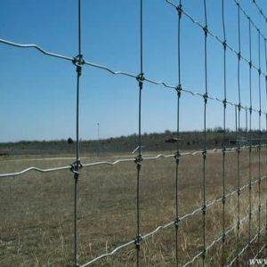 Grassland Fence/ Cattle Fence/ Hog Fence Professional Manufacture pictures & photos