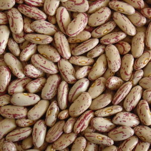 Light Speckled Kindney Beans