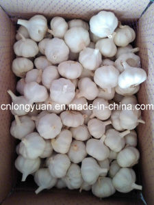 Top Quality Chinese Fresh Pure White Garlic pictures & photos