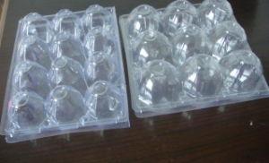 Eggs Tray