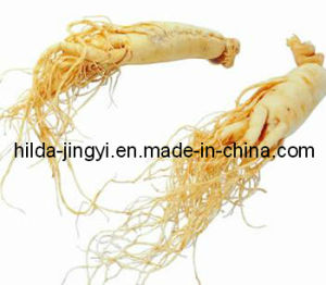 Ginseng Root Extract