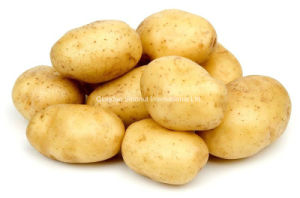 China Shandong Province Fresh Potato pictures & photos