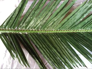 Artificial Plants and Flowers of Coco Palm 6m 18lvs. pictures & photos