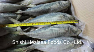 Big Whole Frozen Carapau Horse Mackerel Size pictures & photos