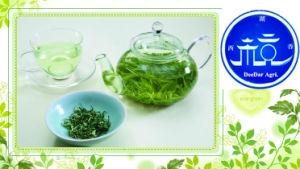 Good Taste Green Tea in Summer pictures & photos