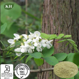 Sophora Japonica Extract 95%-98% Quercetin, Rutin 95% pictures & photos