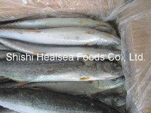 Frozen W/R Spanish Mackerel Fish Cheap Price pictures & photos