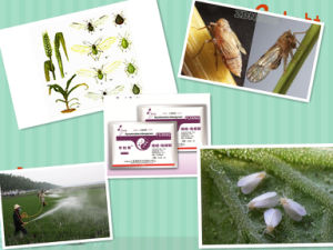 Agricultural Chemicals Insectifuge Insecticide Techical Pymetrozine 96% 98% Tc 123312-89-0 pictures & photos