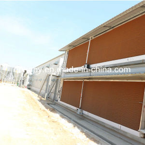Steel Structure Chicken Shed and Chicken Farm Construction pictures & photos