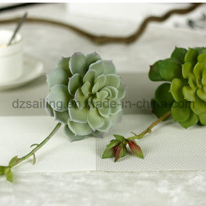 Decorative Plant Natural Touch Artificial Succulents Artificial Flower (SW17667) pictures & photos