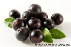 Natural Strong Antioxidant 4: 1 10: 1 Acai Berry Extract pictures & photos