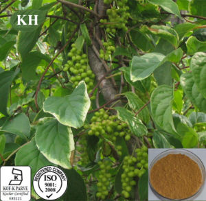 Schizandra Berry Extract Schisandrin 2% by HPLC for Promoting Energy and Alleviating Exhaustion pictures & photos