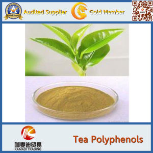 GMP Factory Supplier 100% Natural Java Tea Extract 40% Polyphenols pictures & photos