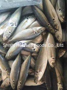 Good Quality Frozen Yellow Tail Scad Fish 8-10 pictures & photos