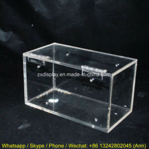 Clear Acrylic Spider Box Acrylic Pets Case Reptile Box pictures & photos