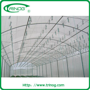Tunnel Film Greenhouse for Vegetables tomato pictures & photos