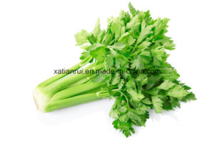 Factory Natural Celery Leaf/Celery Leaves/Apigenin Extract Powder pictures & photos