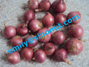 New Purple Fresh Onion 5-7cm pictures & photos