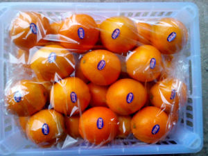 Delicious Fruit First Quality Navel Orange pictures & photos