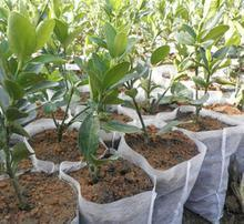 Non-Woven for Agricultural Protection pictures & photos