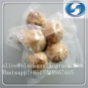 Black Garlic Powder with Health pictures & photos
