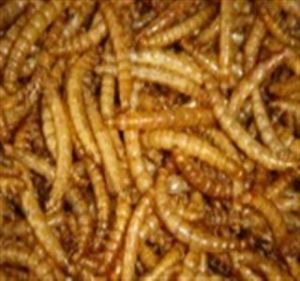 Dried Meal Worm