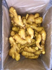 Chinese Fresh New Ginger with High Quality pictures & photos