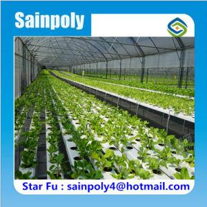 Hydroponics Agriculture Plastic Film Greenhouse pictures & photos