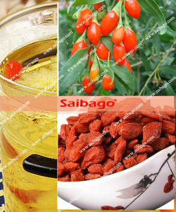 2015 New Crop Ningxia Goji Berry - 280