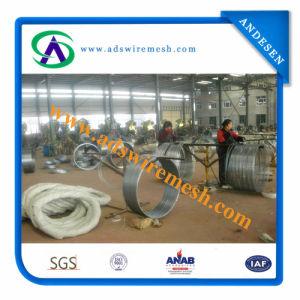 450mm/730mm/980mm Razor Barbed Wire/Galvanized Razor Barbed Wire 10m/16m/20m pictures & photos